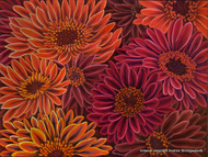 Gerbera Orange Red