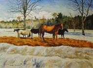 Horse and Ponies in Winter